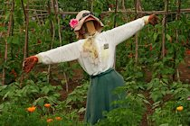 Sheryl (Scare)Crow,The Kitchen Garden, Chastleton House, Oxfordshire